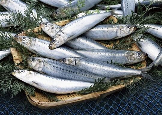 痩せる 食べ物 ランキング 魚