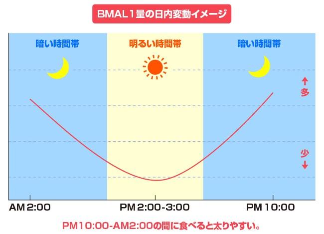 BMAL-1